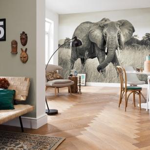 komar-foto-tapete-elephant-interieur