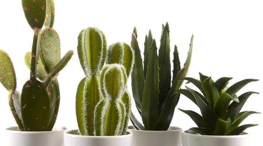 diverse Zimmerpflanzen künstlich sehen aus wie echt kwp Baumarkt