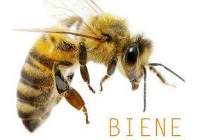 Unterschied zwischen Wespe und Biene kwp Baumarkt